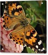 Pink N Orange Acrylic Print