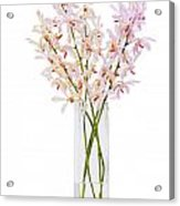 Pink Orchid In Vase Acrylic Print
