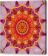 Pink Orchid Mandala-1 Acrylic Print