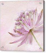 Pink Palette Acrylic Print by Jacky Parker