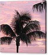 Pink Palm Acrylic Print