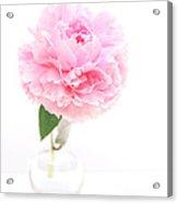 Pink Peony In Glass Vase Acrylic Print