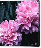 Pink Peony Pair Acrylic Print