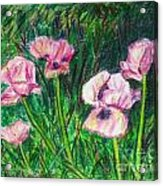 Pink Poppies Acrylic Print