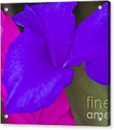 Pink Quill Acrylic Print