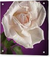 Pink Rose And Rain Drops Acrylic Print by M K  Miller