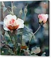 Pink Rose Bush Acrylic Print