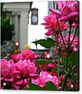 Pink Roses In The City Acrylic Print