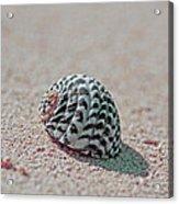 Pink Sand Acrylic Print