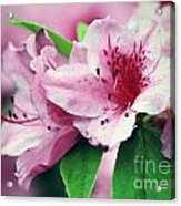 Pink Tiger Acrylic Print