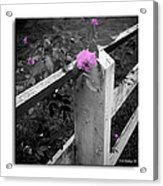 Pink Touch Acrylic Print