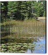 Pintail Pond4 Acrylic Print