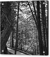 Pintail Trail2 Acrylic Print