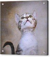 Piper Acrylic Print by Pat Abbott