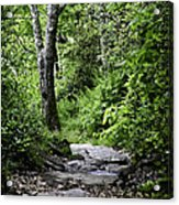 Pisgah Path Acrylic Print