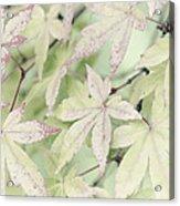 Pistachio Maple Acrylic Print by David Lade