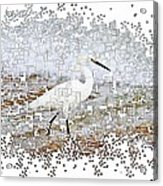 Pixel Cowbird Acrylic Print