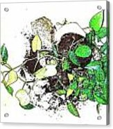 Plant Falls Acrylic Print by YoMamaBird Rhonda