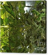 Plant Growth Experiment, Iss Acrylic Print