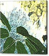 Plant Life Inside-outside Acrylic Print