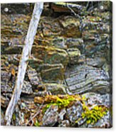 Plant Life On Rocky Canadian Lake Shore Acrylic Print