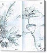 Plant Sketches Acrylic Print