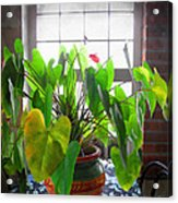 Planter In France Acrylic Print