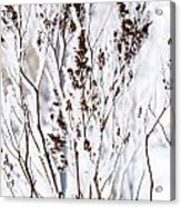 Plants In Winter Acrylic Print