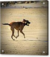 Playing Ball On The Beach  Acrylic Print