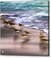 Playing Pipers Acrylic Print