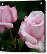 Pleasurable Pink Acrylic Print