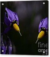 Pleasures Of Purple Acrylic Print