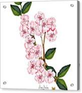 Plum Beautiful Acrylic Print