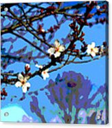 Plum Tree Blossom Acrylic Print