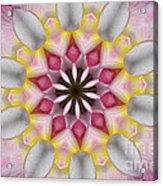 Plumeria 3 Acrylic Print