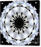 Plumeria 4 Acrylic Print
