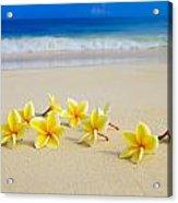 Plumerias On Beach II Acrylic Print