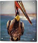 Plump Peter Pelican's Pier Photo Pose Acrylic Print