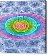 Plurality Of Worlds Leonhard Euler Acrylic Print