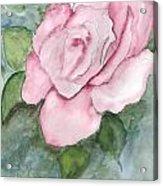 Pnk Rose Acrylic Print