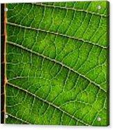 Poinsettia Leaf IIi Acrylic Print