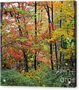 Point Beach State Forest Acrylic Print