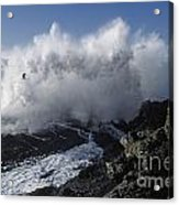 Point-lobos-9-5 Acrylic Print by Craig Lovell
