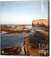 Point Lobos Number Three Acrylic Print by Catherine Lau