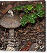 Point Lobos Park  Acrylic Print