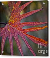 Pointedly Acrylic Print