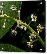 Poke Sallet Flowers Acrylic Print