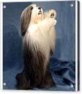Polish Lowland Sheepdog 243 Acrylic Print
