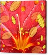 Pollen And Flower Acrylic Print