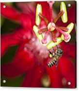 Pollen Collection Service Acrylic Print by Zoe Ferrie